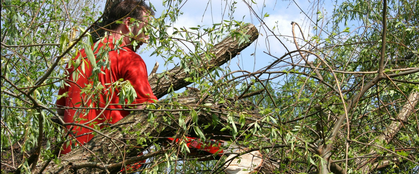 A tree limb removal service in West Farmington, OH